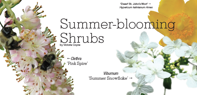 Summer-blooming Shrubs