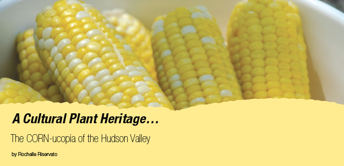 Corn is one of the true heralds of summer in the Northeast and a defining crop for Hudson Valley agriculture.