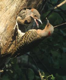 Birdwatching in the Hudson Valley   VISITvortex   MAGAZINE ...