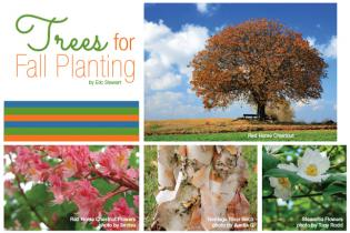 Trees for Fall Planting