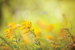 ALTERNATIVE WAYS TO BEAT SEASONAL ALLERGIES